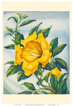 Yellow Hibiscus (Ma'o Hau Hele) - State Flower of Hawaii