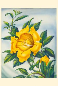 Yellow Hibiscus (Ma'o Hau Hele) - State Flower of Hawaii by Ted Mundorff