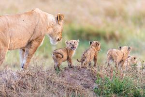 Let's Go Mom by Ted Taylor