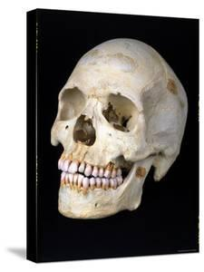 Modern Homo Sapiens Skull by Ted Thai