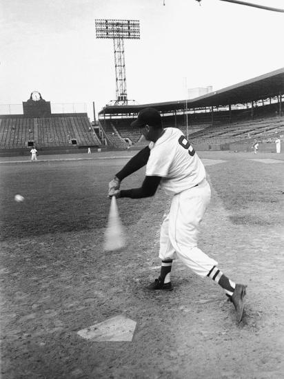 Ted Williams Taking A Swing During Batting Practice Premium Photographic Print By Ralph Morse Art Com