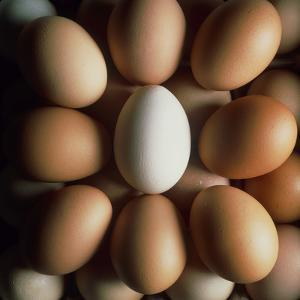 Eggs by Tek Image