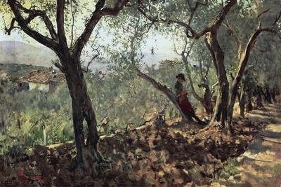Among Olive Trees in Settignano, 1881