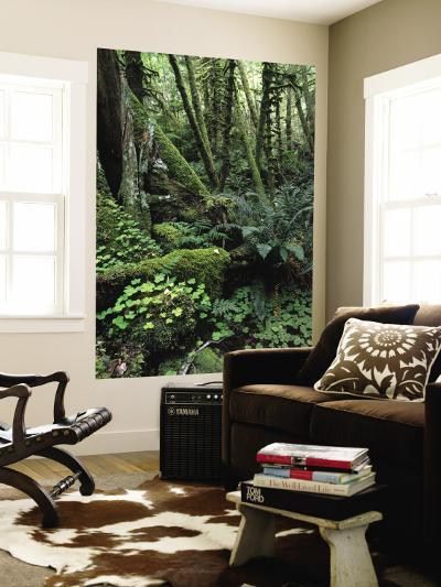 Temperate Rainforest with Ferns and Moss-Covered Tree Trunks-Brent Winebrenner-Wall Mural