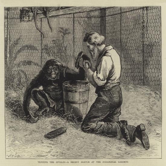 Tending the Invalid, a Recent Sketch at the Zoological Gardens-Samuel Edmund Waller-Giclee Print