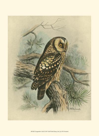 Tengmalm's Owl-F^w^ Frohawk-Art Print