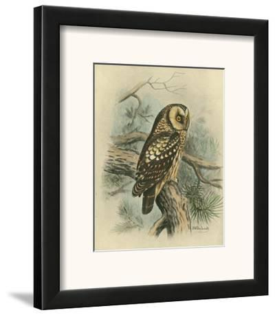 Tengmalm's Owl-F^w^ Frohawk-Framed Art Print