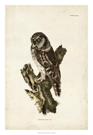 Tengmalm's Owl-John Selby-Giclee Print