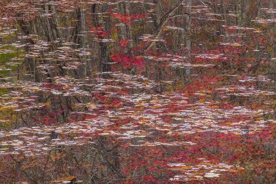 Tennessee, Falls Creek Falls SP. Fall Reflections in Fall Creek Lake-Don Paulson-Photographic Print