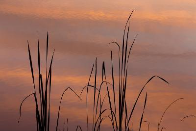 Tennessee, Falls Creek Falls State Park. Sunrise on Cattails in Lake-Don Paulson-Photographic Print
