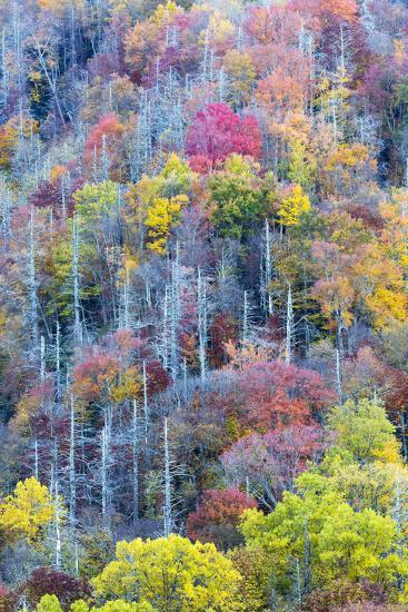 Tennessee, Great Smoky Mountains NP, View Along Newfound Gap Road-Jamie & Judy Wild-Photographic Print