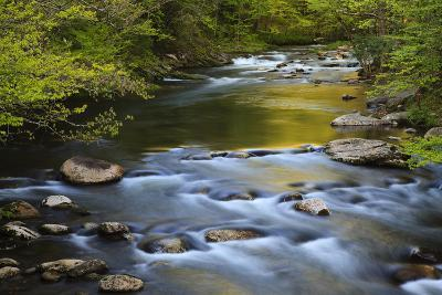 Tennessee, Spring Reflections on Little River at Smoky Mountains NP-Joanne Wells-Photographic Print