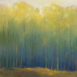 Deep Woods in Summer by Teri Jonas