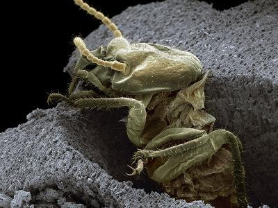 Termite Emerging From Wood, SEM-Steve Gschmeissner-Photographic Print