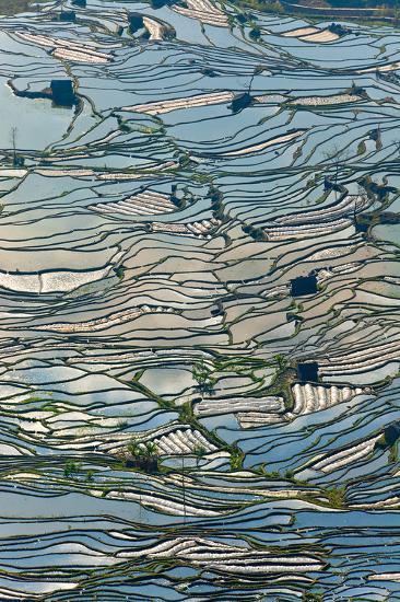 Terrace Reflections II-Peter Adams-Giclee Print