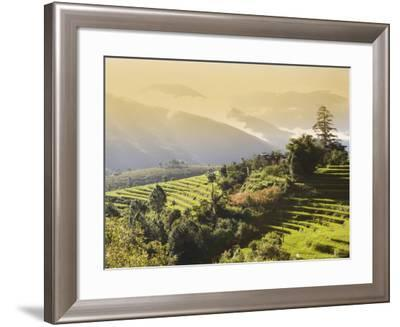 Terraced Rice Fields, Punakha, Bhutan, Himalayas, Asia-Angelo Cavalli-Framed Photographic Print