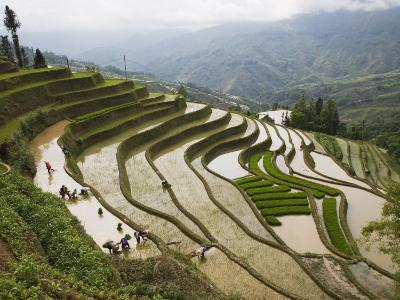 Terraced Rice Fields, Yuanyang, Yunnan Province, China-Angelo Cavalli-Photographic Print