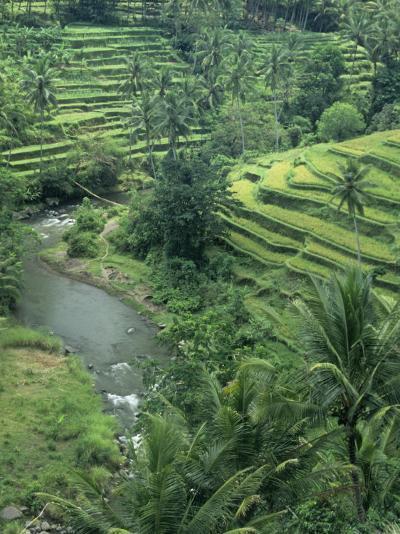 Terraced Rice Paddies (Oryza Sativa), Java, Indonesia-Tim Hauf-Photographic Print
