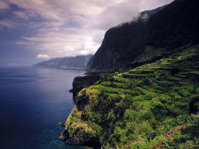 Terraced Vineyards, Seixal, Madeira, Portugal-Walter Bibikow-Photographic Print