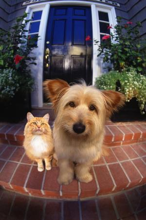 Terrier and Orange Tabby Waiting on Front Stoop-DLILLC-Photographic Print
