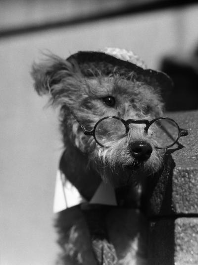 Terrier Dog Wearing Spectacles and Hat-H^ Armstrong Roberts-Photographic Print