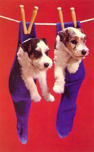 Terrier Puppies in Socks, Retro