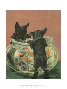 Terrier Trouble VI