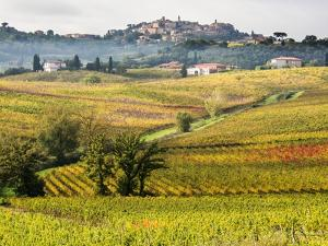 Autumn Vineyards in Full Color near Montepulciano by Terry Eggers