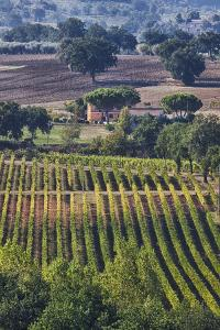 Close Up of Harvest Time Vineyards by Terry Eggers