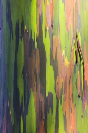 Close-Up of Rainbow Eucalyptus by Terry Eggers