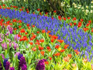 Display garden in full bloom by Terry Eggers