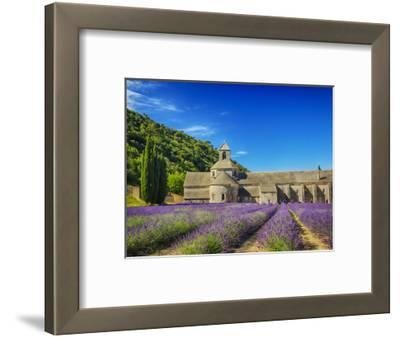 France, Provence, Senanque Abbey with Lavender in Full Bloom