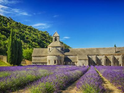 France, Provence, Senanque Abbey with Lavender in Full Bloom by Terry Eggers