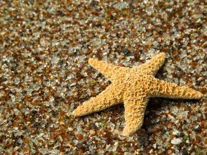Glass Beach with Star Fish, Kauai, Hawaii, USA by Terry Eggers