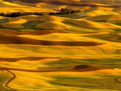 Harvest Time Fields, Palouse, Washington, USA by Terry Eggers