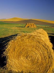 Hay Bales in Field, Palouse, Washington, USA by Terry Eggers