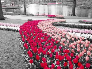 Netherlands, Lisse. Multicolored flowers blooming in spring. by Terry Eggers