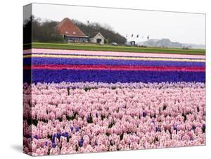 Netherlands. Spring flower fields. by Terry Eggers