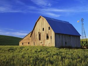 Old Barn and Spring Wheat Field by Terry Eggers