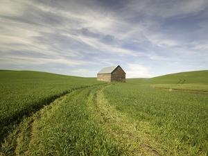 Old Barn in Wheat Field by Terry Eggers