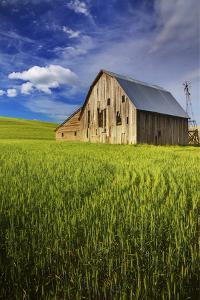 Old Barn Surrounded by Spring Wheat Field, Pr by Terry Eggers