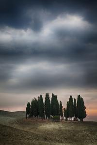 Olive Groves and Vineyards of the Monticiano Area by Terry Eggers