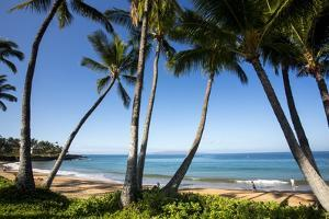 Palm Trees and Beach along the Southern Maui by Terry Eggers