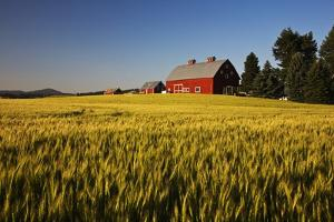 Red Barn in Field of Harvest Wheat by Terry Eggers