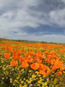 Road through Poppies, Antelope Valley, California, USA by Terry Eggers