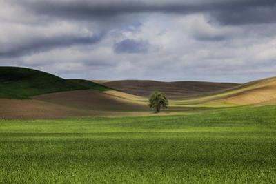 Rolling Wheat Fields with Lone Tree by Terry Eggers