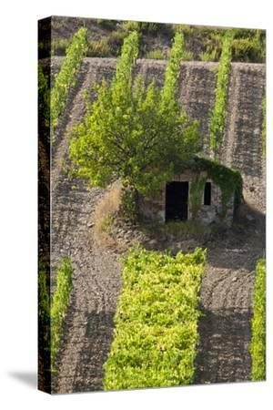 Small Rock Shed in the Vineyards in the Rolling Hills of Tuscany