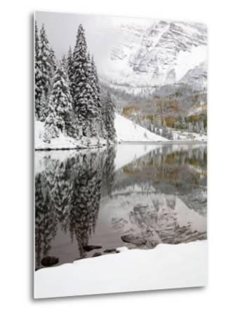 Snow Covered Aspens, Maroon Bells, Colorado, USA