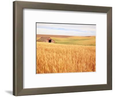 Sprawling Wheat Field