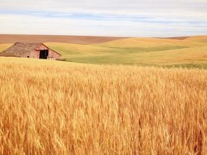Sprawling Wheat Field by Terry Eggers